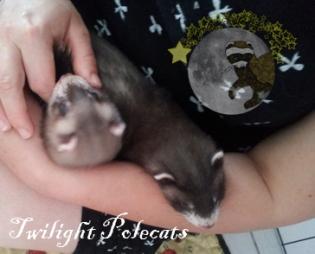 bebes angus pandore