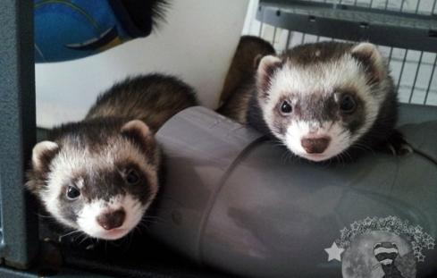 Pookie et Elinor