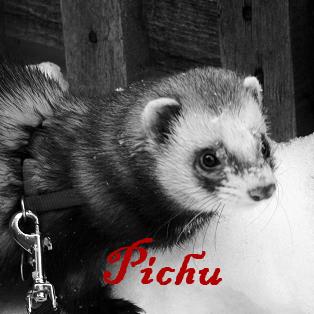 pastille pichu.png