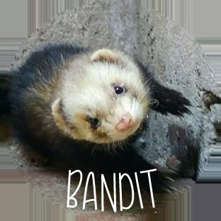 pastille bandit